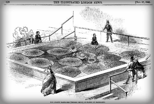 Nineteenth-Century Giant Water Lily at Chatsworth; London News, Nov. 14, 1849. Image: Wikipedia.