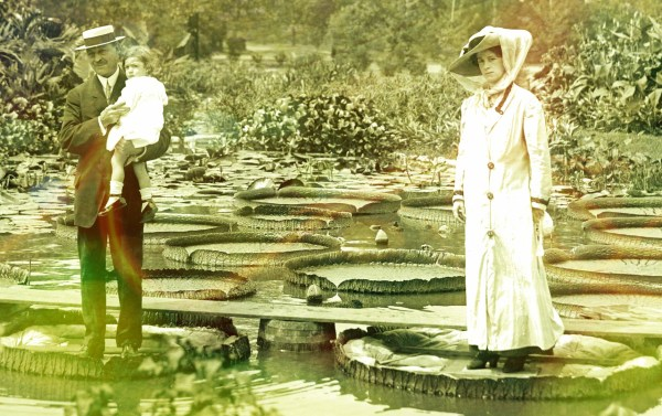 Giant Victoria Water Lily. Image: Missouri Historical Society.