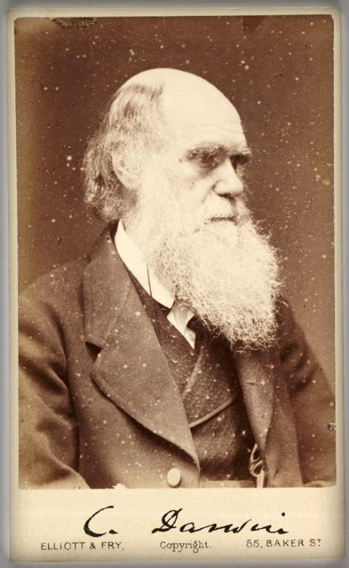Victorian Cardomania: Charles Darwin, 1880. Image: scienceandmediamuseum.org.uk