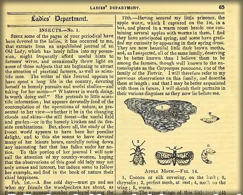 American Agriculturalist Magazine, Ladies' Department, 1846.