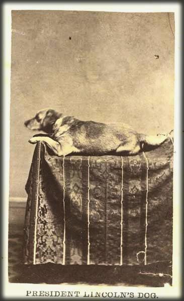 Fido Lincoln CDV, c. 1865. Image: Wikipedia.