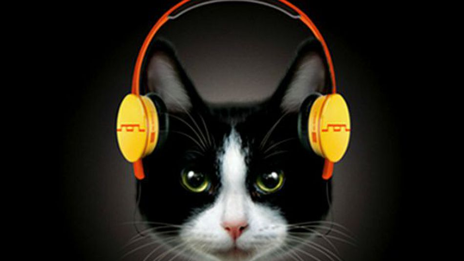 Headphones-for-cats-they-cost-1-000-122b4c5a78