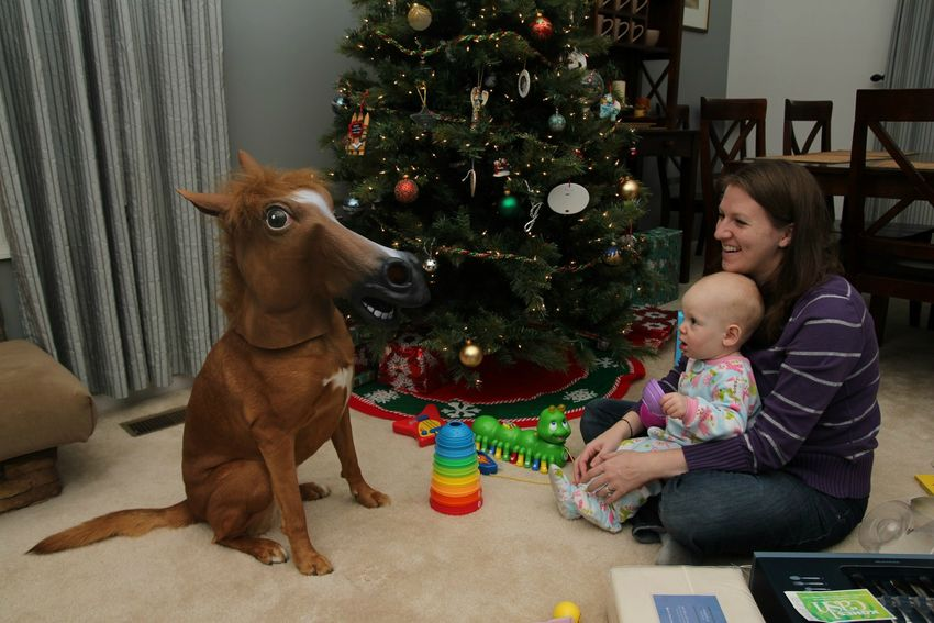 Pony-for-baby