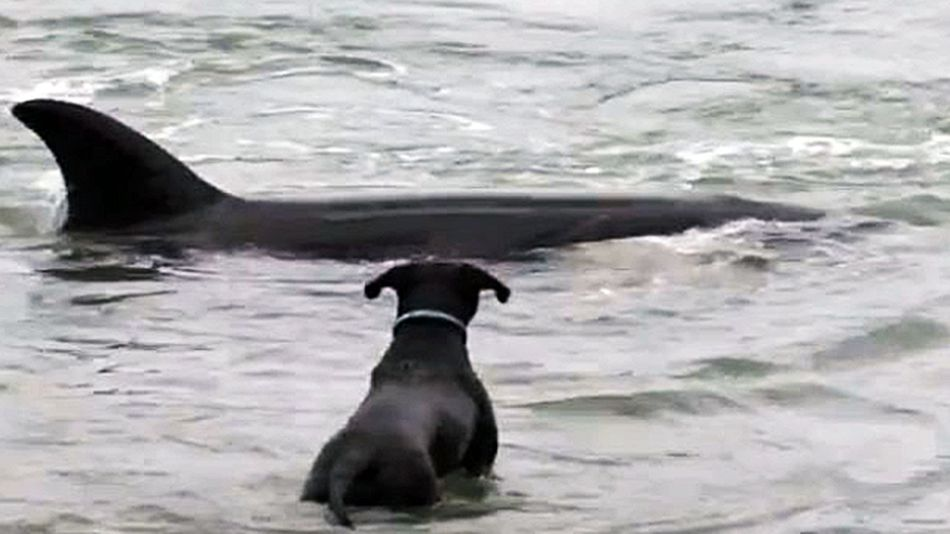 Killer-whale-plays-with-dog-video--7a426328ef