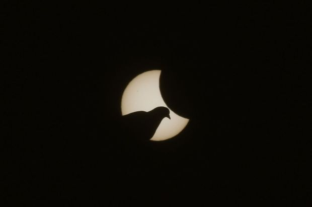 A dove is pictured in front of the sun during a partial solar eclipse on March 20, 2015 in Munich, Germany.