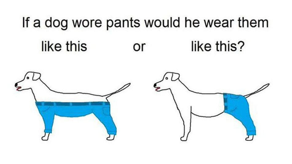 How_a_dog_wears_pants