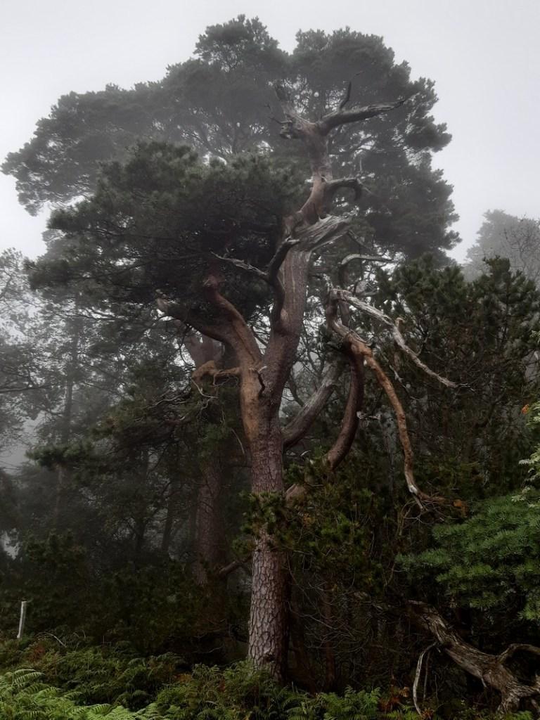 arbre forêt Glendalough Irlande