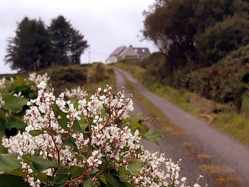 Route irlandaise comté de Clare