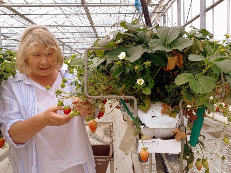Margaret Productrice de fraises comté de Wexford
