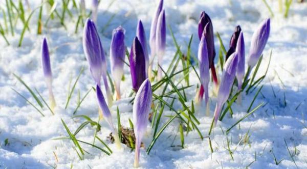 Погода в Україні 23 березня: синоптики прогнозують ...