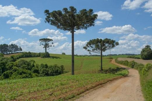 Campo Magro Paraná