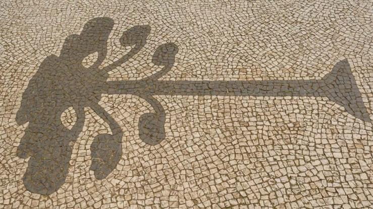 Araucária na calçada