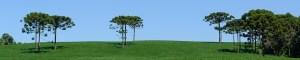 Área rural com araucárias