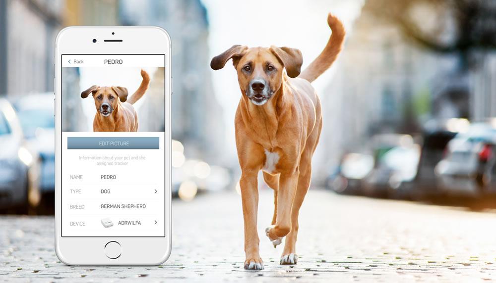 O profissional de veterinária terá a tecnologia como ferramenta integrada de trabalho
