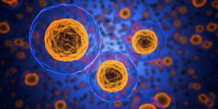 O novo sistema foi desenvolvido a partir de nanopartículas feitas de materiais chamados de teranósticos – com aplicações simultâneas em terapia e em diagnóstico – desenvolvidos pelos pesquisadores nos últimos anos. Imagem: Pixabay