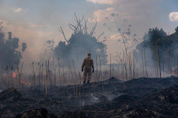 Se 20% a 25% da cobertura arbórea da Amazônia for desmatada, a capacidade da bacia de absorver dióxido de carbono pode entrar em colapso. Foto: Fotos Públicas