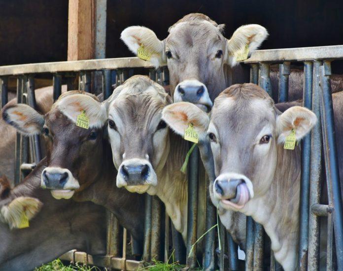 O setor lácteo passa por desafios internos há anos, sobretudo em razão dos custos de produção e logística.