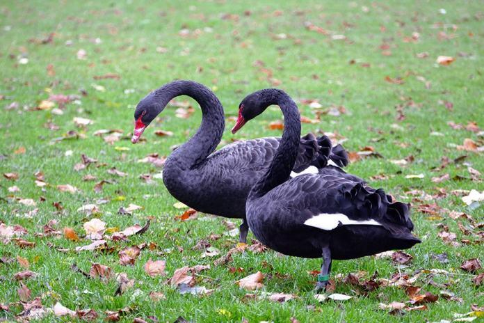 "O surto de pandemias, como o coronavírus, identificado como ""cisne negro"" por vários analistas, foi previsto por futuristas Foto: Pixabay"