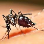 Dengue volta a assustar as cidades em 2019