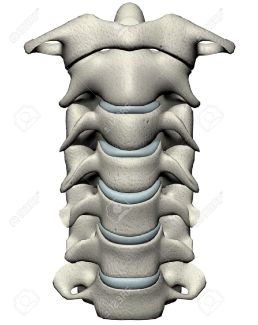 2257409-Human-cervical-spine-anterior-anatomical-3D-illustration-on-white-background-Stock-Illustration
