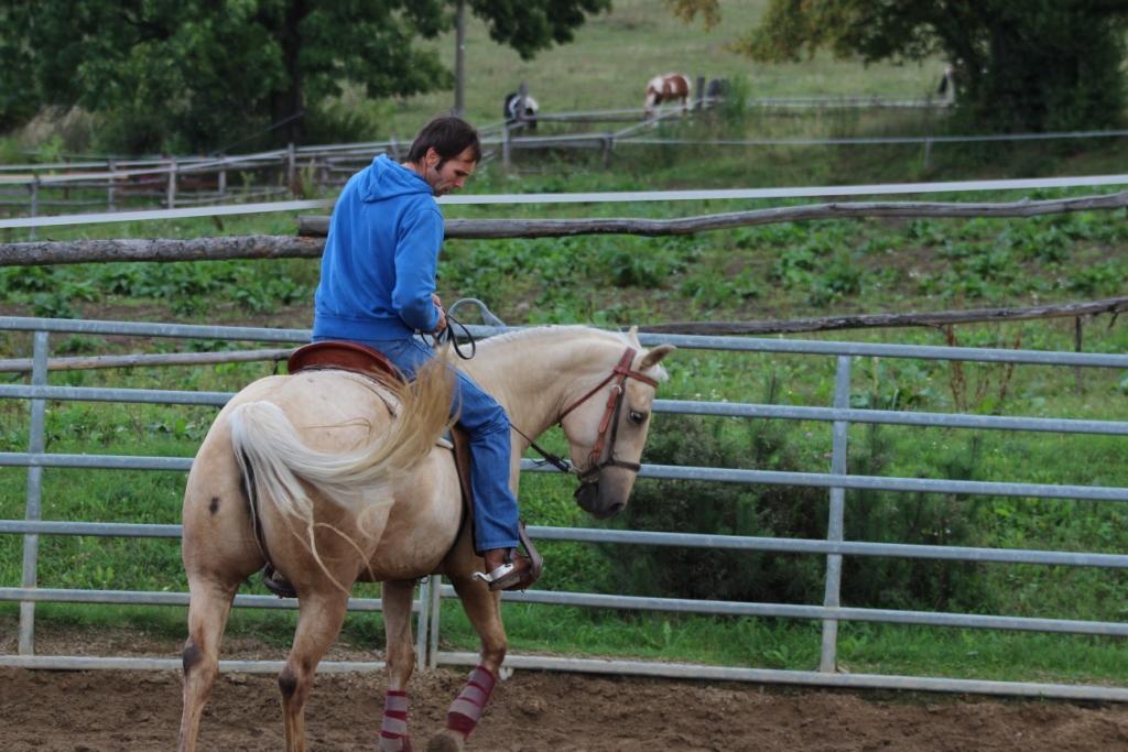 Aby se kůň zlepšoval
