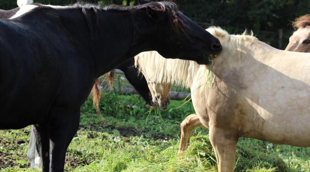 Proč mě ten kůň kouše?