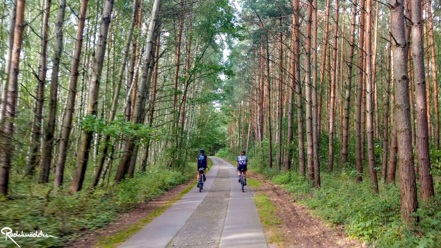 cyclists in the woods