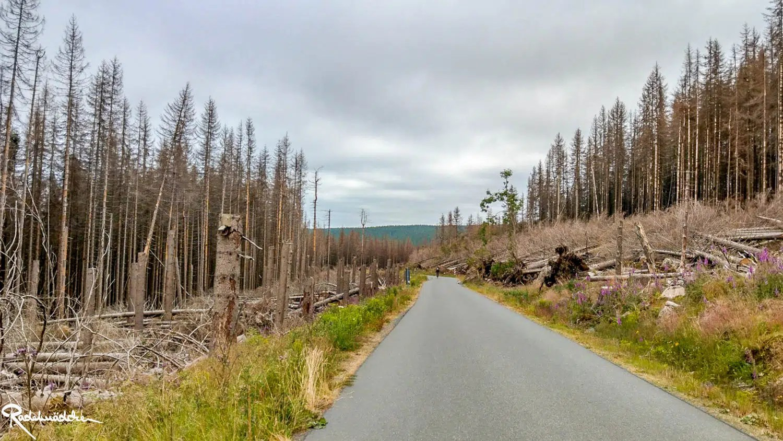 Brockenaufstieg mit kahlen Bäumen