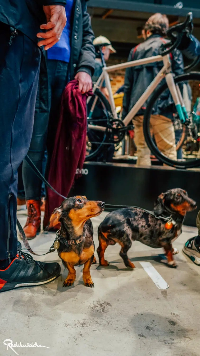 dogs at kolekitf Berlin 2020