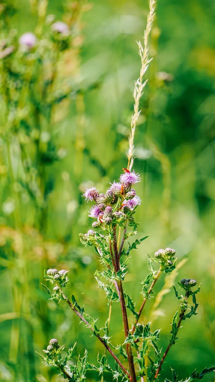 Blumen mit Käfern