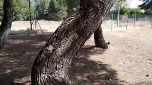 Giros desesperados en el bosque misterioso por Joan Carles López