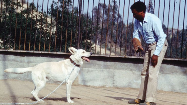 Films in London this week: WHITE DOG, part of BIG SCREEN CLASSICS: TURMOIL! at BFI (23 AUG).