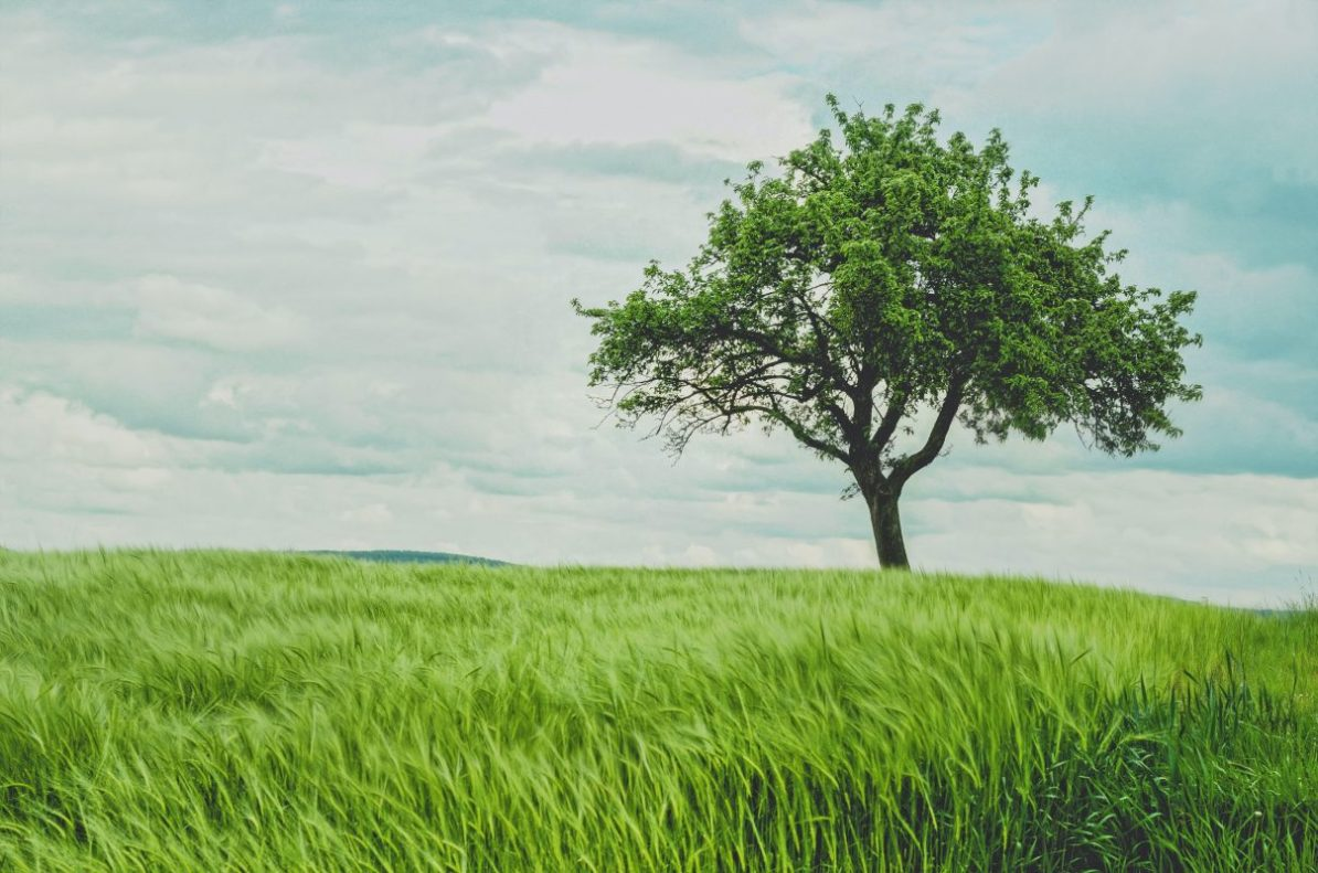 Learn what your headache is telling you and how a shady tree can help you calm and unblock your qi
