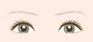 眉頭から眉尻までが細い方