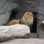 Facing Your Lions