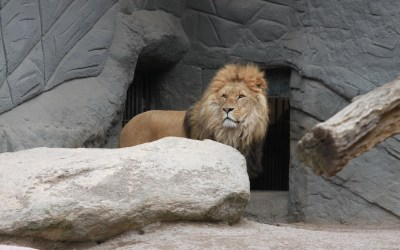 Facing Your Lions – A Letter to My Sons