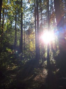 a forest clearing in the fall, the sun visible behind trees whose leaves are changing color