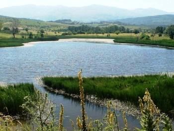 liqeni brezne opoje