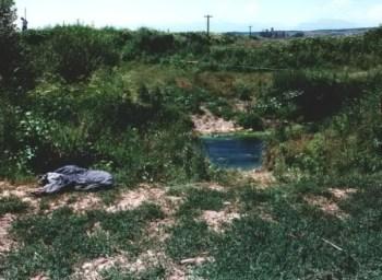 kufoma dekomponimi lumi