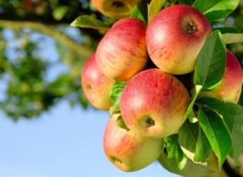 molla dhe shendeti