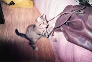 小マリリンとバッグ