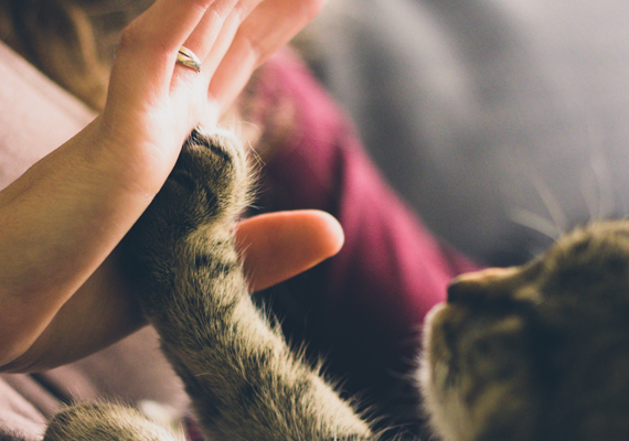 Cat High-Five for Volunteer Page