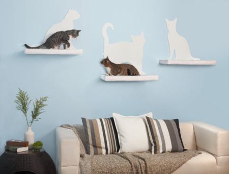 pisica-perete