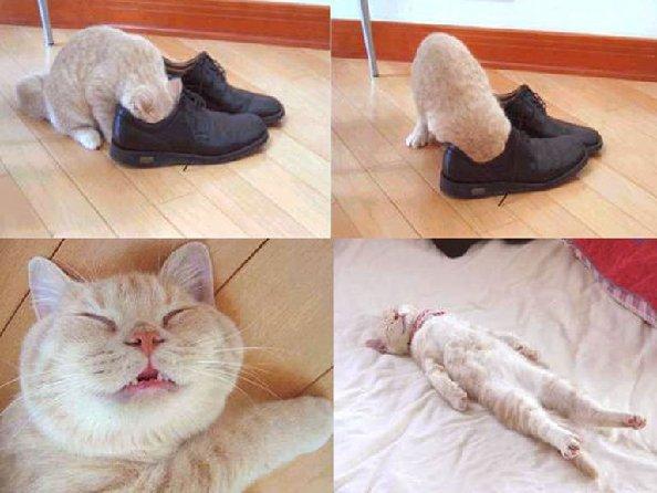 pisici si papuci - photo credits Alvin Alexander