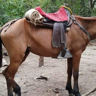 Turista Argentina denunció en redes el mal estado de los caballos en el Parque Tayrona