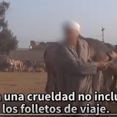 PETA revela la crueldad animal detrás del turismo en Egipto