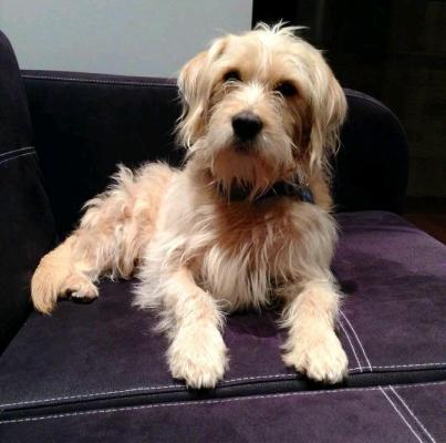 Imagen; Oliver, uno de los perros beneficiados por la decisión del juez.