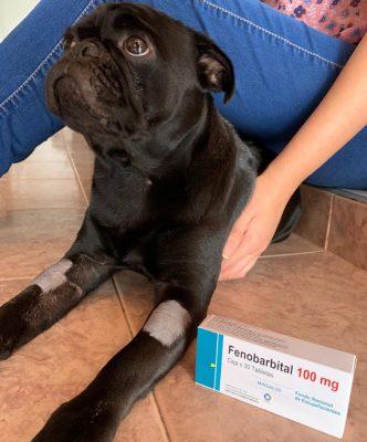 Imagen: Canino Paco paciente diagnosticado con epilepsia idiopática