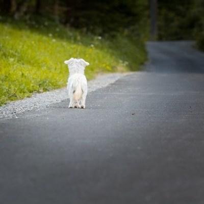 Abandono de animales en Colombia, ¿cómo se sanciona?¿es considerado maltrato animal?