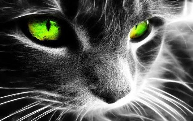 gatos energías malas negativas